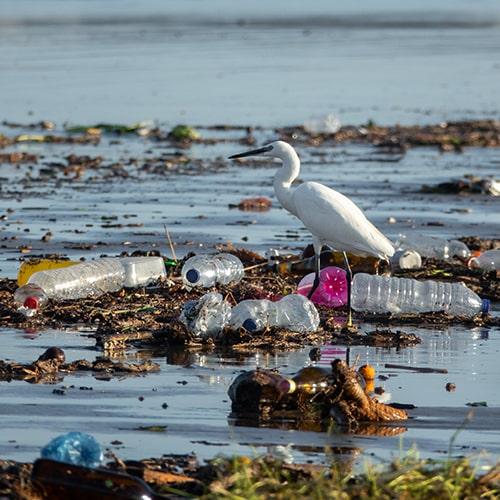 What to Look for in a Water Bottle - Egretta Garzetta Walking Between Many Plastic Bottles