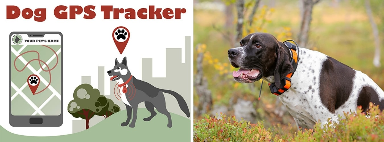 Tips for Camping with a Dog - Dogs with GPS Tracker