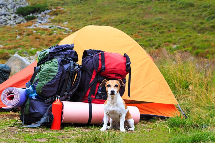 Tips for Camping with a Dog - Dog Near Tent and Camping Gears